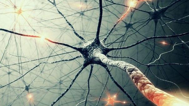 Для тела — аэробика, а для ума – нейробика